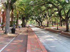 university of florida campus - Google Search