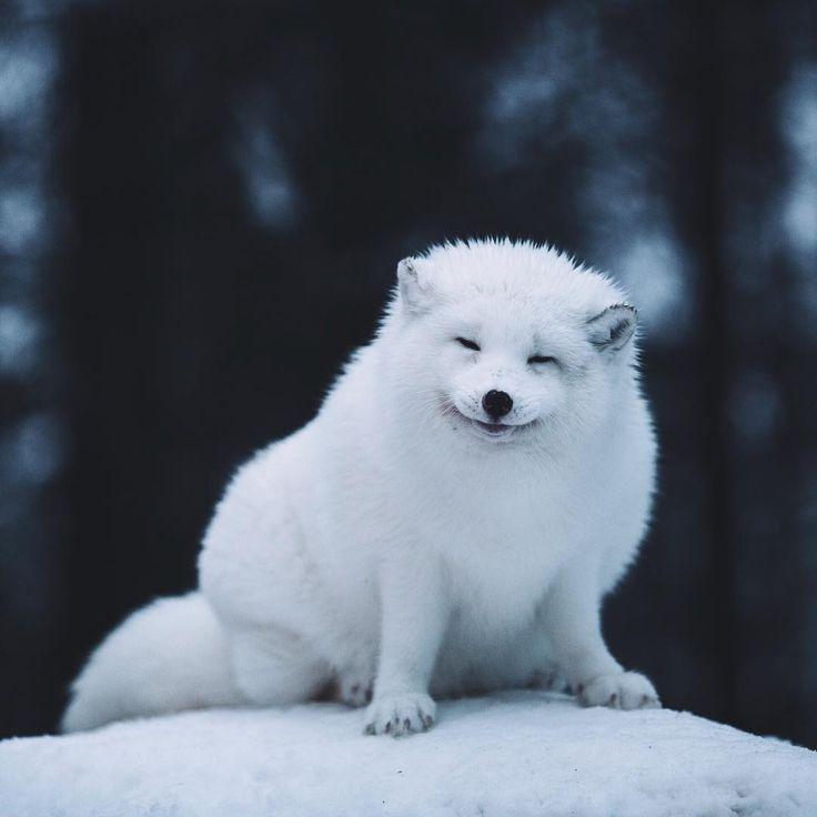 https://i.pinimg.com/736x/f2/03/d4/f203d4c0091a8b834209268edb49678b--arctic-fox-pixel.jpg