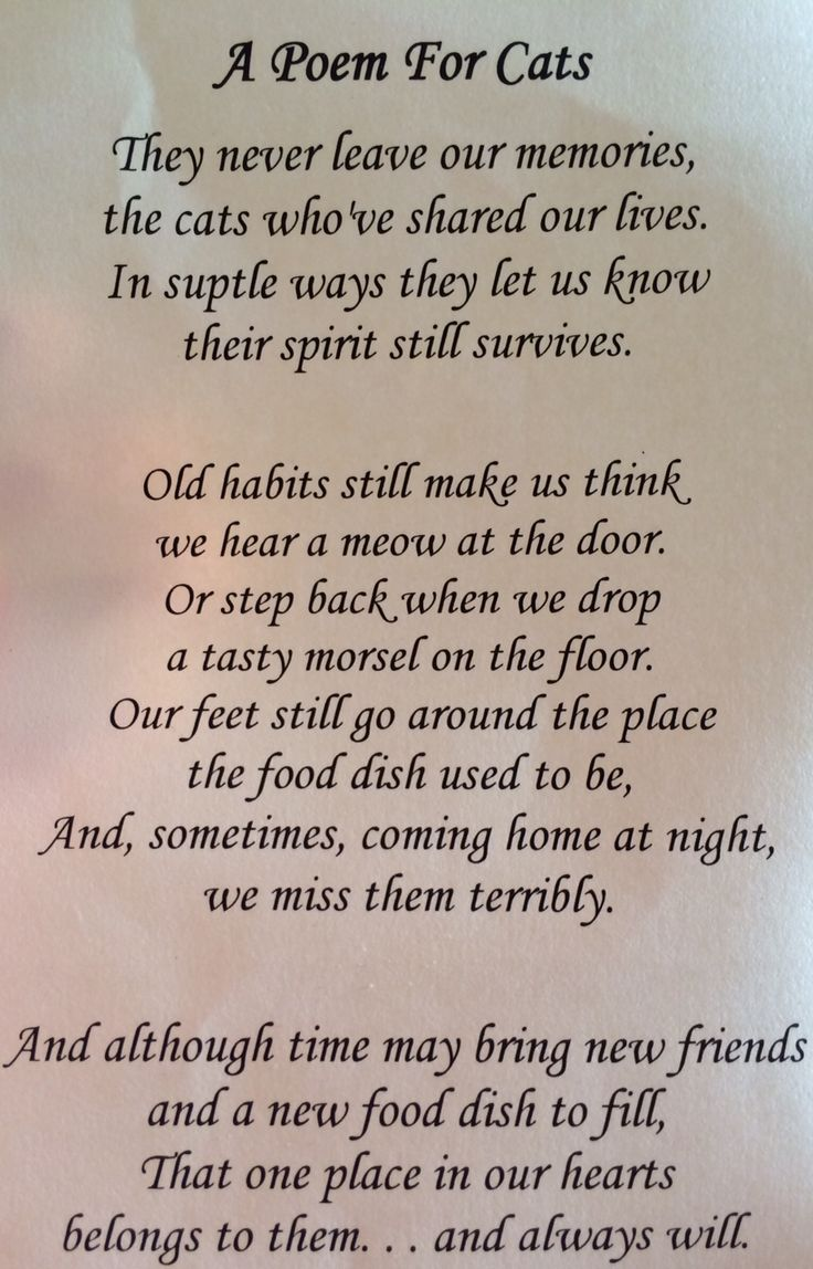 death of a cat poem - Google Search | Kitty | Pinterest ...
