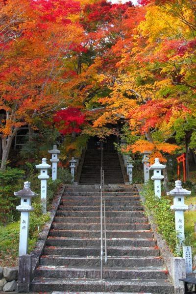 Autumn at Saiko-ji temple, Kyoto, Japan