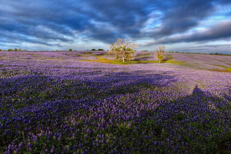 """Early Morning Shadows""  Ennis, TX There are times when being patient when shooting a scene can really pay off.  In 2012 the Bluebonnets exploded in the Ennis area, just souith of Dallas.  This particular field was one of the best I have ever seen.  The sunset on this particular morning wasn't all that great.  As the 20 other photographers near me packed up their gear I noticed a cloud line on the horizon rapidly approaching us.  I left my camera up and as the clouds passed over I had about…"