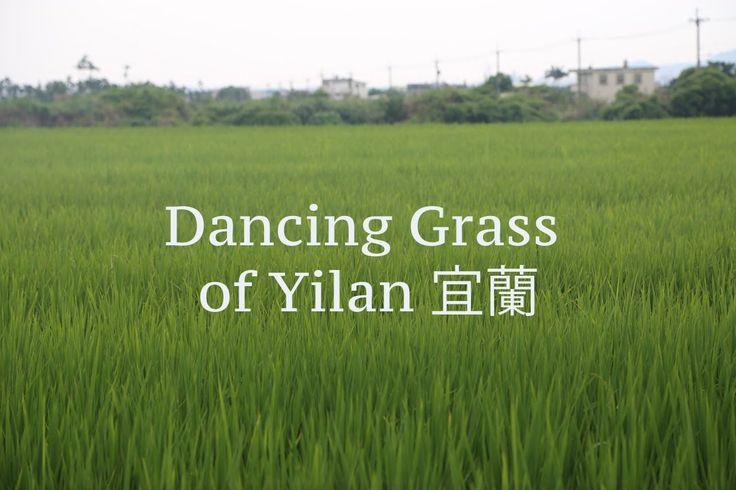 Taiwan travel video - Dancing Grass of Yilan 宜蘭