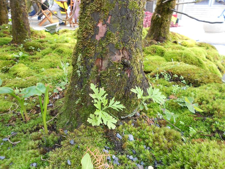 #planta #plant #bonsai #arbol #tree #naturaleza #nature