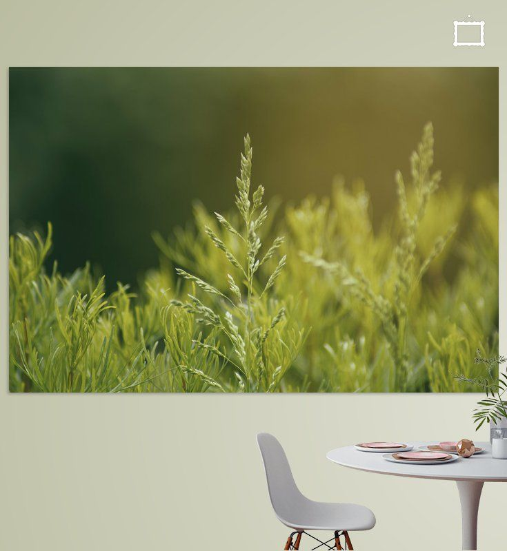 plant poster tomas s ohmyprints kunstdrucke auf leinwand kunstler fotos online bestellen foto