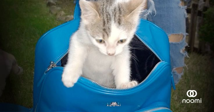 Chicco #cat #bag