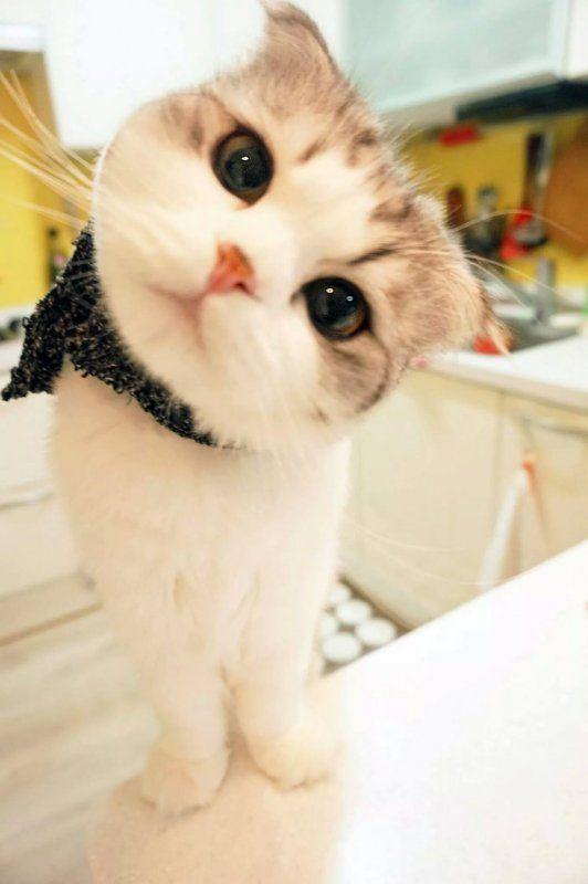 오늘의유머 - 고양이 코카콜라 제로입니다 11강원랜드바카라월드카지노강원랜드바카라월드카지노강원랜드바카라월드카지노강원랜드바카라월드카지노강원랜드바카라월드카지노강원랜드바카라월드카지노강원랜드바카라월드카지노강원랜드바카라월드카지노강원랜드바카라월드카지노강원랜드바카라월드카지노강원랜드바카라월드카지노강원랜드바카라월드카지노강원랜드바카라월드카지노강원랜드바카라월드카지노강원랜드바카라월드카지노강원랜드바카라월드카지노강원랜드바카라월드카지노강원랜드바카라월드카지노강원랜드바카라월드카지노강원랜드바카라월드카지노강원랜드바카라월드카지노강원랜드바카라월드카지노강원랜드바카라월드카지노강원랜드바카라월드카지노강원랜드바카라월드카지노강원랜드바카라월드카지노강원랜드바카라월드카지노