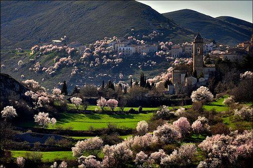 Santo Stefano di Sessanio (AQ) mandorli in fiori