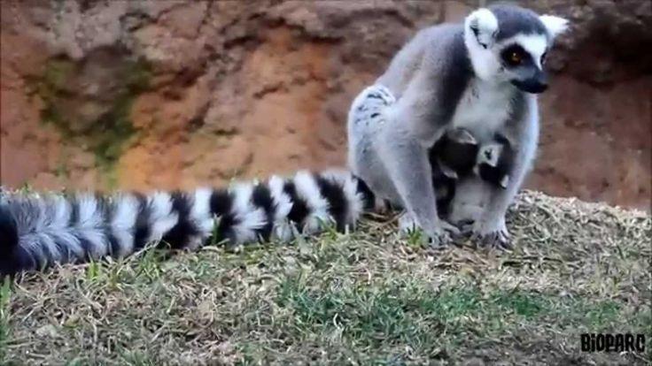 123 mejores im genes sobre animales bonitas en pinterest v deos viol n y youtube - La libelula fuengirola ...