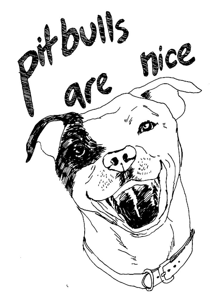 36 best Pitbulls and Dogs images on Pinterest  4 life Blame and