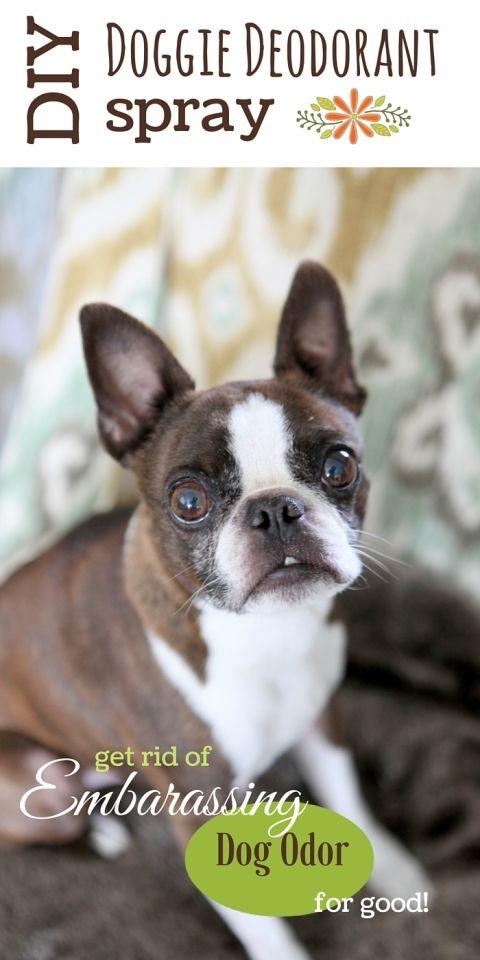 DIY Doggie Deordorant for stinky dogs