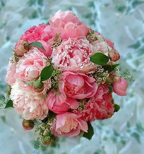 """peony bouquet   Costco sells bulk """"greenery"""" but does it look out of place with the peonies? ~h"""