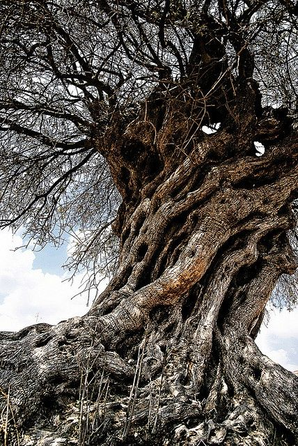 this tree has a scary corrupt feel to it. something you would find in a cursed wood.