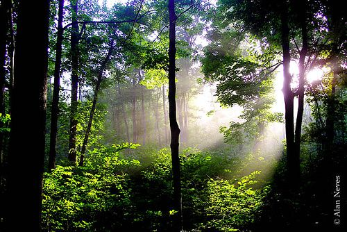 Visit the Sacred Grove