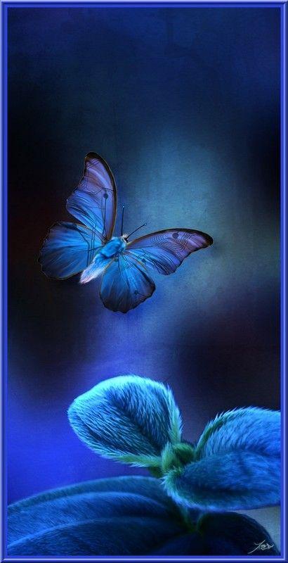 """Butterfly in Blue  "" Niveau Gify , des idées de génie  .I prefer the Rhapsody in Blue !"