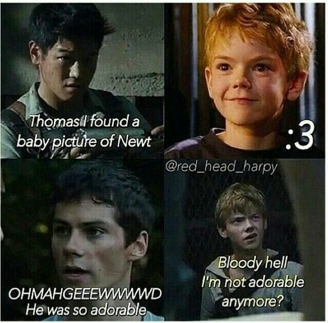 Newt X Reader Fanfiction He's so bloody adorabl...
