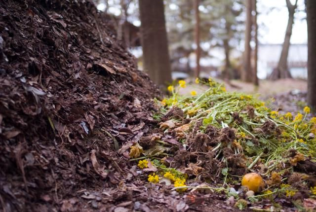 The Easiest Composting Technique You'll Ever Do