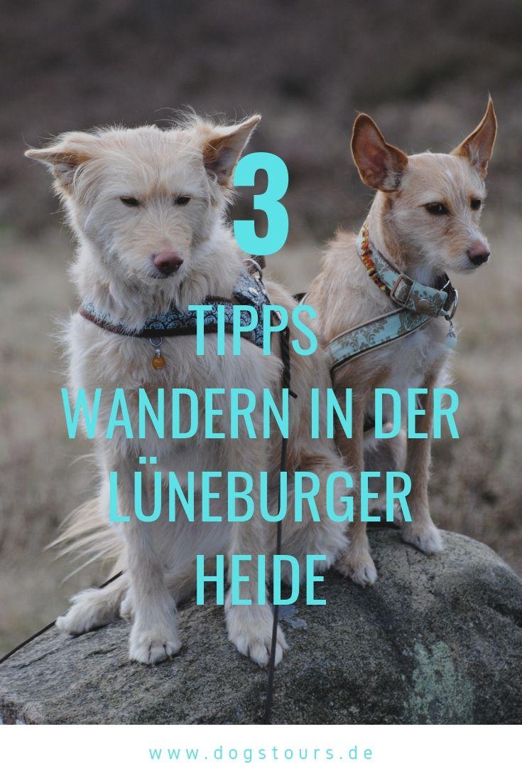 3 Verschieden Wandertipps Fur Die Luneburger Heide Beste Wanderwege Mit Hund Hundehaltung Yorkie Urlaub Mit Hund