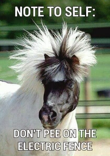 Funny Horse Note Pee Electric Fence Meme Picture http://www.iqcatch.com/