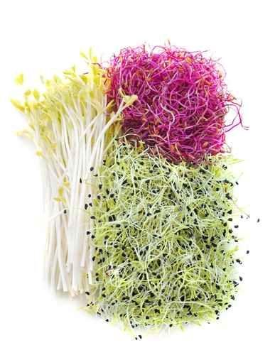 Le pouvoir des graines germés Guide des propriétés médicinales des graines germés Comment profiter de tous ces bienfaits