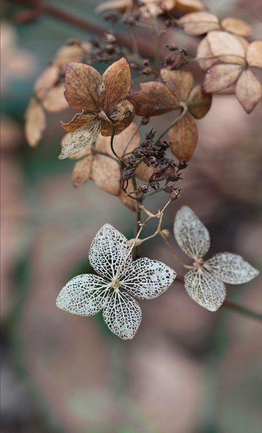 leaves.                                                                                                                                                     Plus