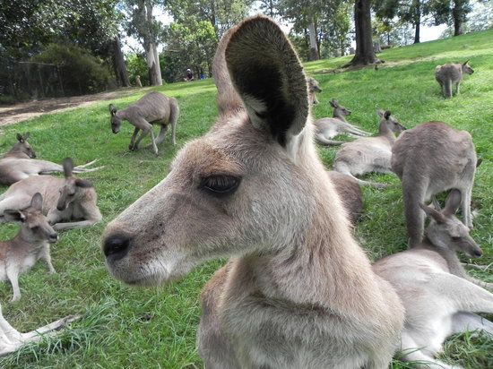 Book your tickets online for Lone Pine Koala Sanctuary, Brisbane: See 3,710 reviews, articles, and 2,145 photos of Lone Pine Koala Sanctuary, ranked No.2 on TripAdvisor among 253 attractions in Brisbane.