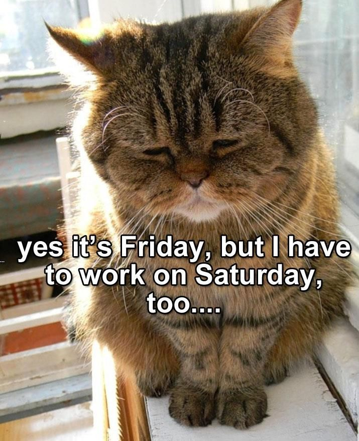 Disappointed cat....This is Me every week! #Caturday