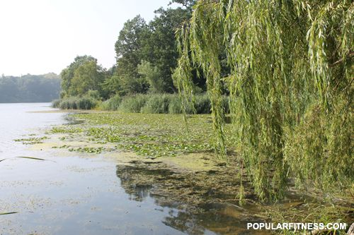 High Park and Grenadier Pond