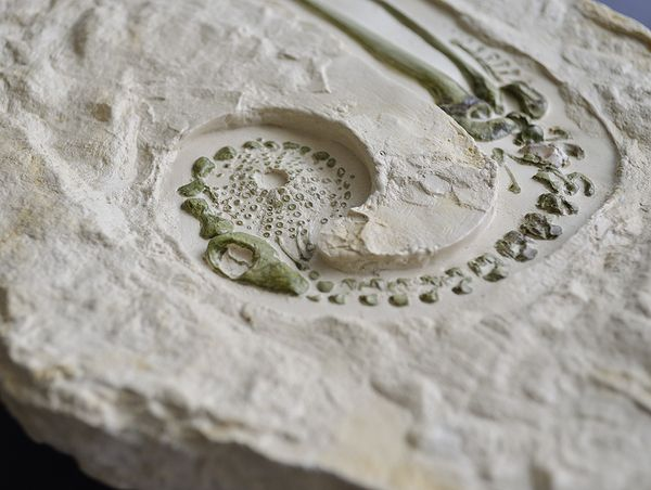 """""""Evolution of Type"""": Intriguing Fossilized, 3D Type, Fossilized Letters, Sorting Letters, Typographic Fossils, Evolution"""