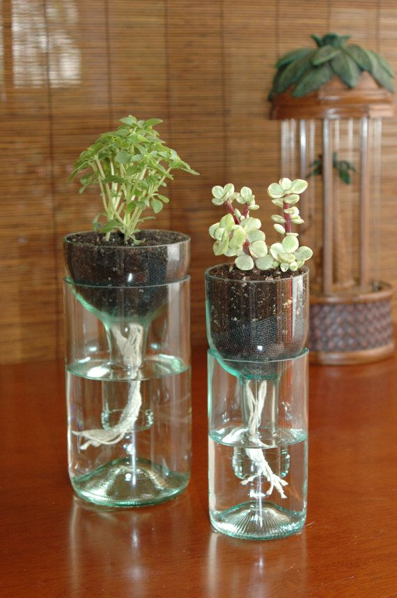 Self-watering planter made from recycled wine bottles.
