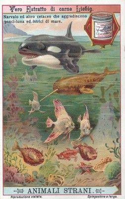 Animali strani marini, 1911