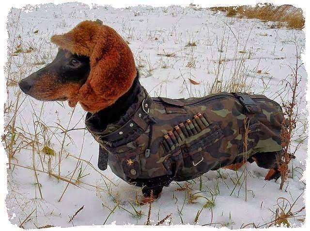 The Long and Short of it All: A Dachshund Dog News Magazine: Viral Dachshund Photos