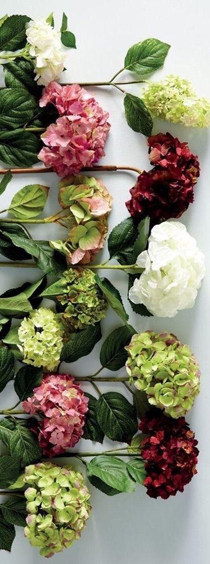 die besten 25 sch ne rosen ideen auf pinterest rosen. Black Bedroom Furniture Sets. Home Design Ideas