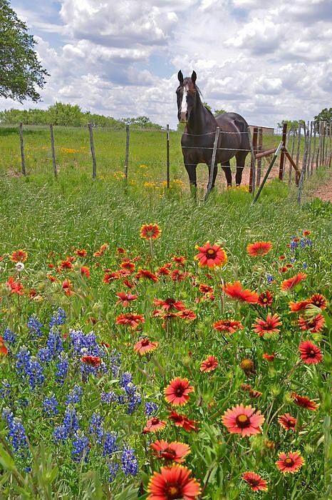 174 best texas flowers shrubs trees images on pinterest for Flower hill farms