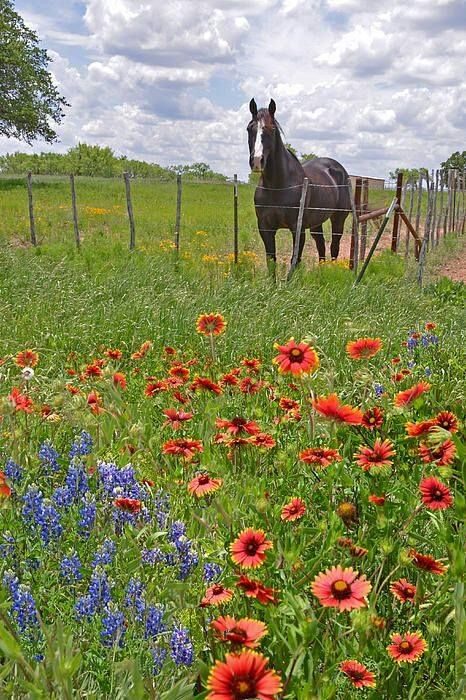 Texas fields.