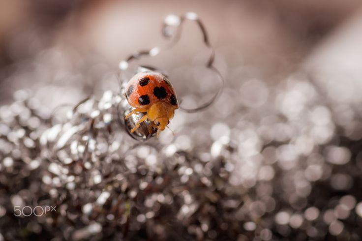 Obstacle - Ladybug