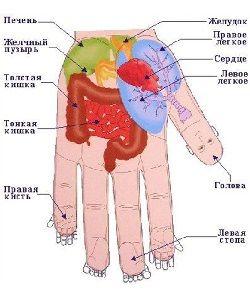 Точечный массаж рук. Су Джок массаж. Су Джок терапия лечение