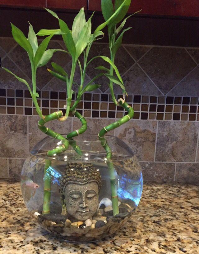 Home Aquarium Ideas: The Aquarium Buyers Guide I love this!!! need to do it for sure.
