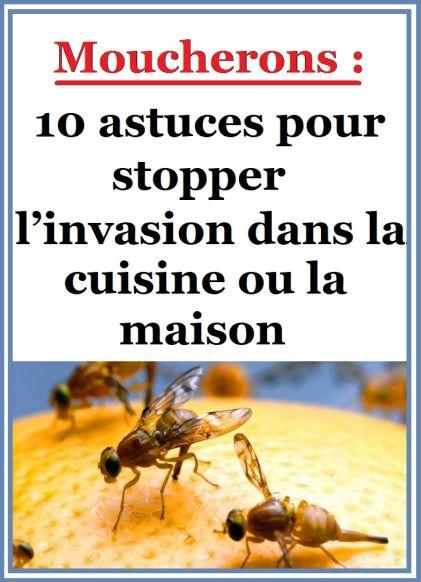 Moucherons 10 astuces pour stopper l 39 invasion dans la cuisine ou la maison m nages hacks - Moucherons cuisine ...