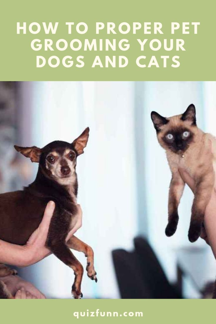 How To Proper Pet Grooming Your Dogs And Cats Baby Cats Best Cat Litter Dog Cat