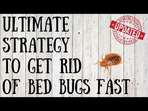 4 Easy Ways to Get Rid of Bed Bugs Organically - wikiHow