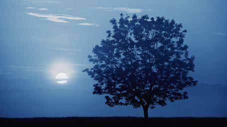 Mondkalender: Gärtnern mit dem Mond - Mein schöner Garten http://www.mein-schoener-garten.de/de/gartenpraxis/nutzgarten/mondkalender-was-steckt-dahinter-20354