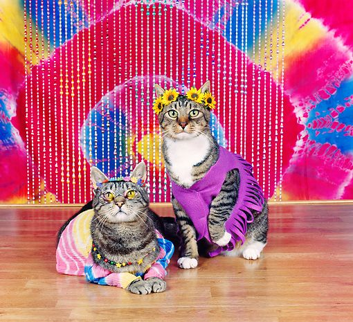 In honor of September 21, 2015 International Day Of Peace - here are some beautiful hippie cats! #peace #cats