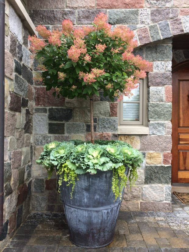 621 best Contained Gardens images on Pinterest Pots Gardening