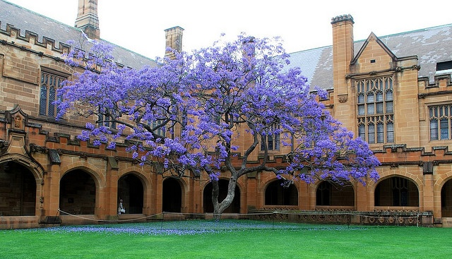 Where I became a little bit cleverer University of Sydney