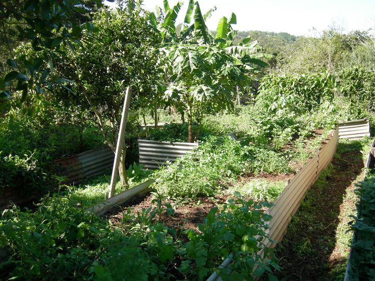 Permaculture Pilgrimage: Zaytuna Farm - urban food garden demonstration plot