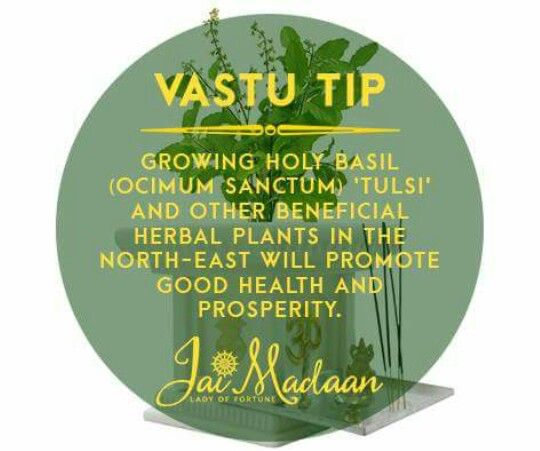#plant#health#prosperity