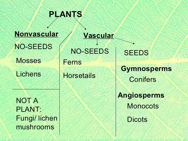 The Plants Kings and Queens of the World of Green Angiosperms – Vascular and Nonvascular Plants Worksheet