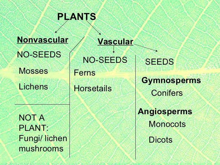 Vascular Plants - Lessons - TES