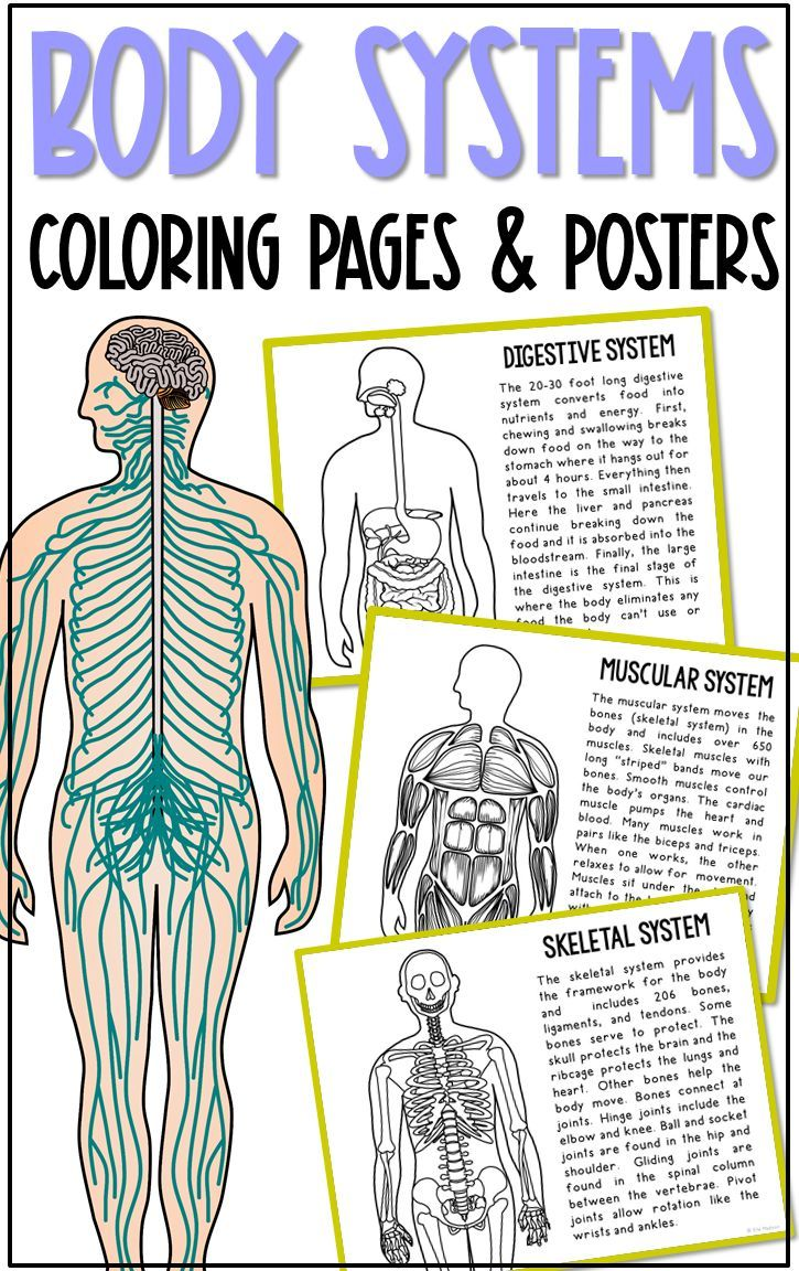 Body Systems Posters And Coloring Pages Anatomy Biology