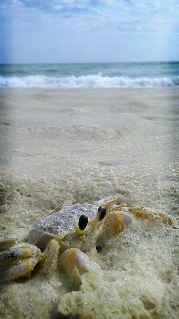 1015 Best Images About Beach Pensacola Beach Amp Perdido